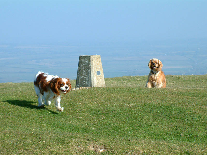 Henry and George on Firle Beacon