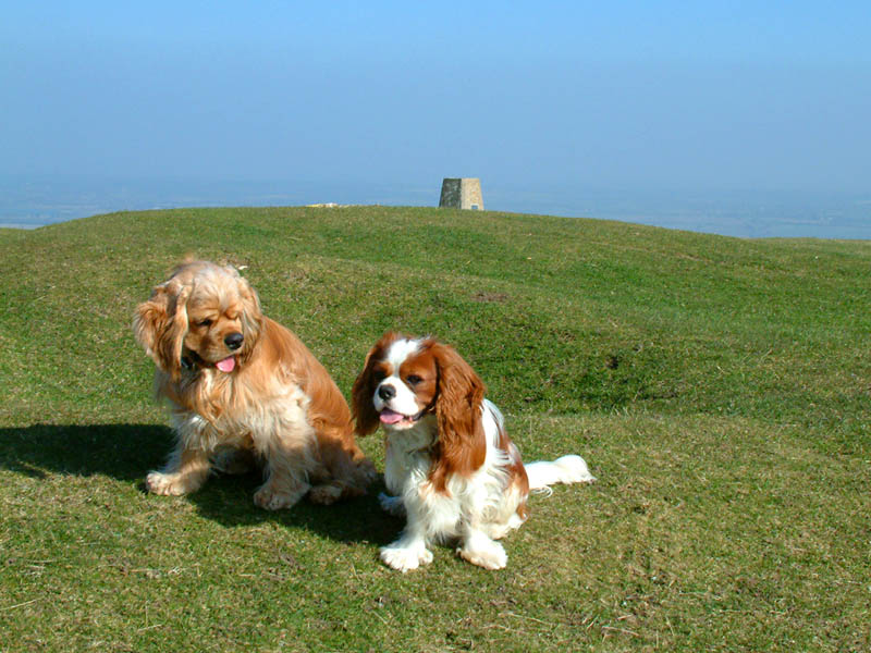 George and Henry on Firle Beacon