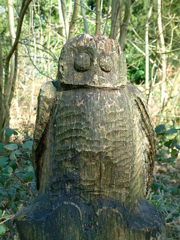 Carving of owl in Wendover Woods (click for larger photo)