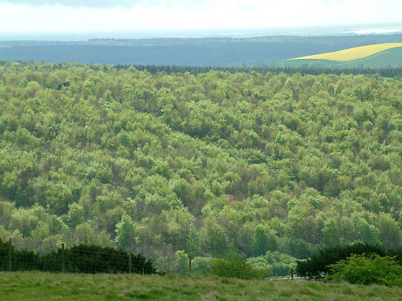 View from Butser Hill in Hampshire