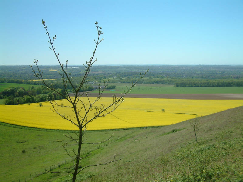 View from North Downs Way near Detling