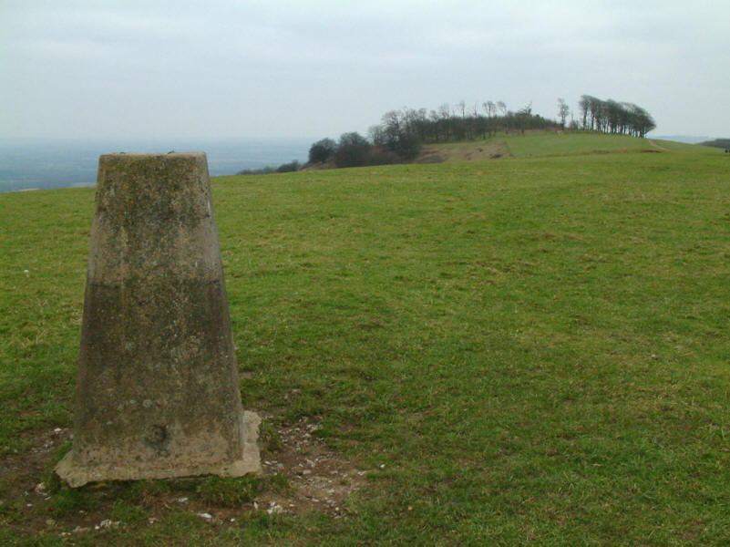 trig point and beech trees of Chanctonbury Ring