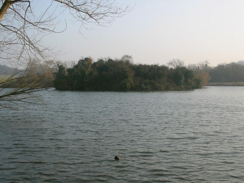 Lake in Hainault Forest Country Park