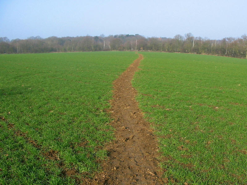 Field path on the London Loop