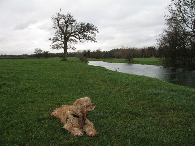 River Thames near Kemble