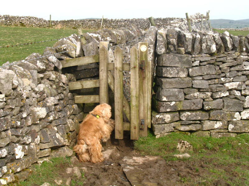 Dog opening stile gate