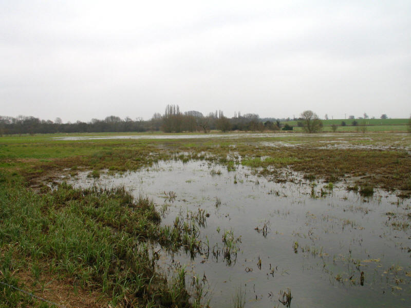 River Stort flood plain