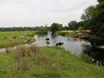 Picnickers, canoeists, rowers and cows share the River Stour near Dedham Mill