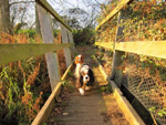 Ellie and Hetty on a footbridge on the Mid-Suffolk Footpath