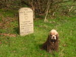 A very muddy George by a milestone on a North Downs Way walk from Westerham to Wrotham