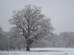 Snowy tree on Tooting Bec Common on a Capital Ring walk