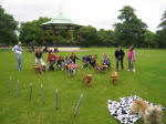 Pupapalooza dog party in Greenwich Park