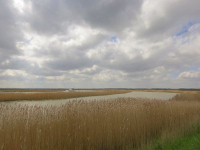 River Yare between Reedham and Berney Arms