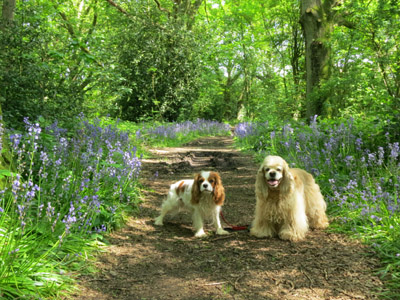 Lottie and George in bluebell woods near Nuffield on the Ridgeway
