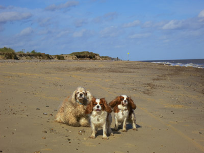 George, Lottie and Hetty on the beach north of Benacre